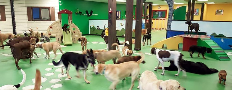 Things to Know Before Considering a Puppy Daycare