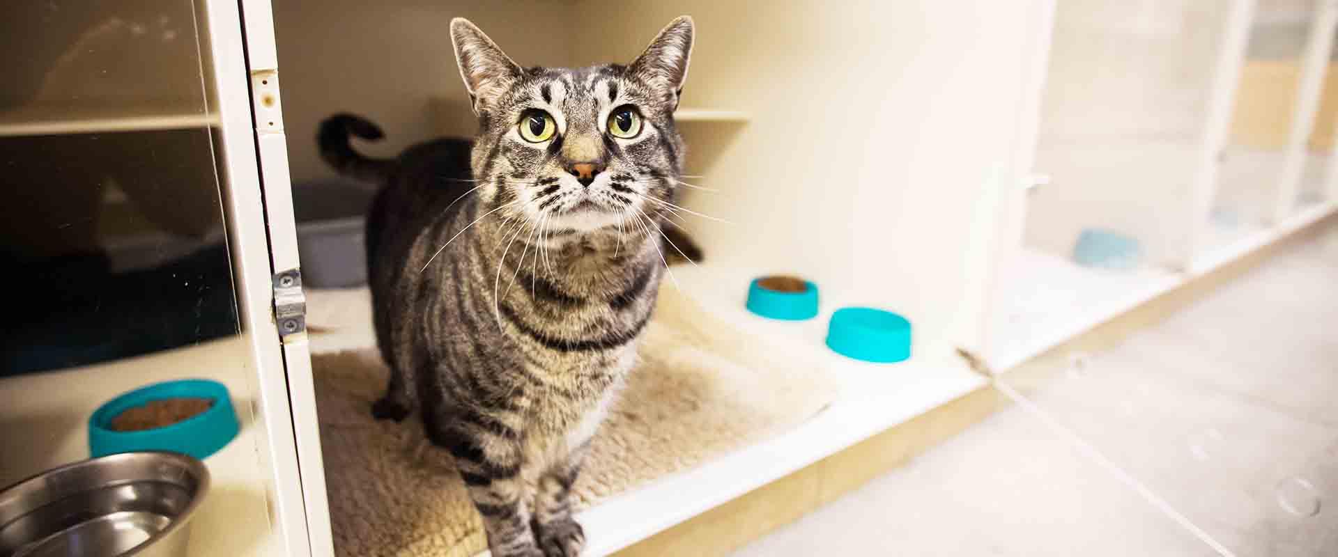 Cat Boarding | Cascade Kennels