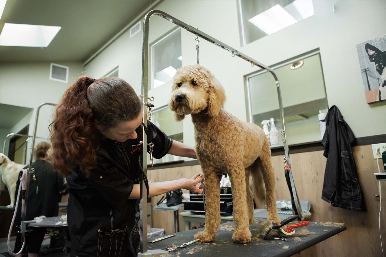 dog-cat-pet-grooming-salon-woodinville-3