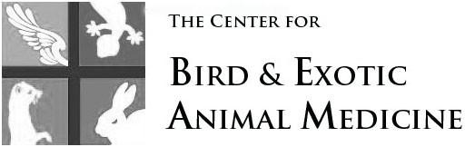 Animal-Medicine
