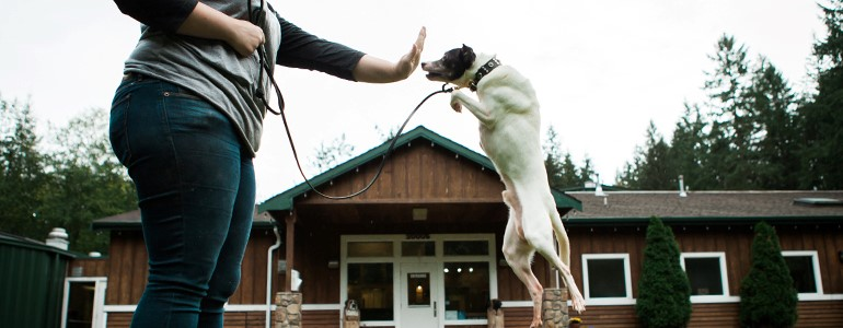 science-based-dog-training-positive-reinforcement
