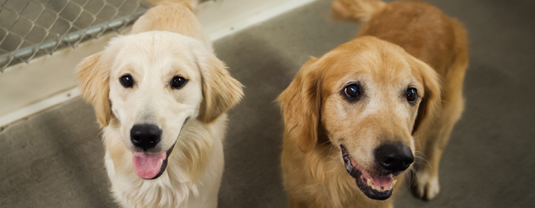 Six Ways to Stop Your Dog's Barking | Cascade Kennels