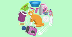 6-steps-to-prepare-for-getting-a-kitten-bsp-321179395