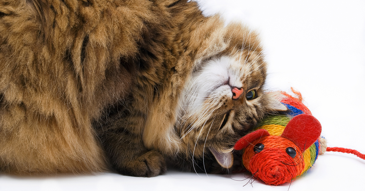 5 Ways to Exercise Your Indoor Cat