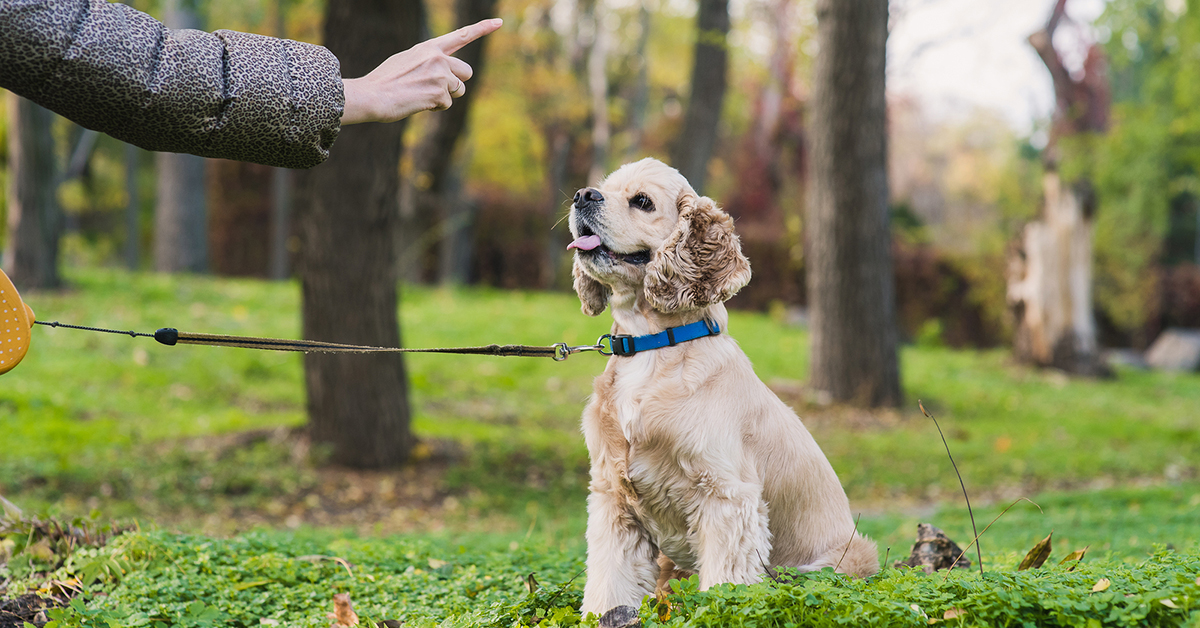 Finley's Tips for Stopping Leash Pulling