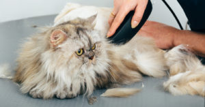 Don't Make These Mistakes When Grooming Your Cat