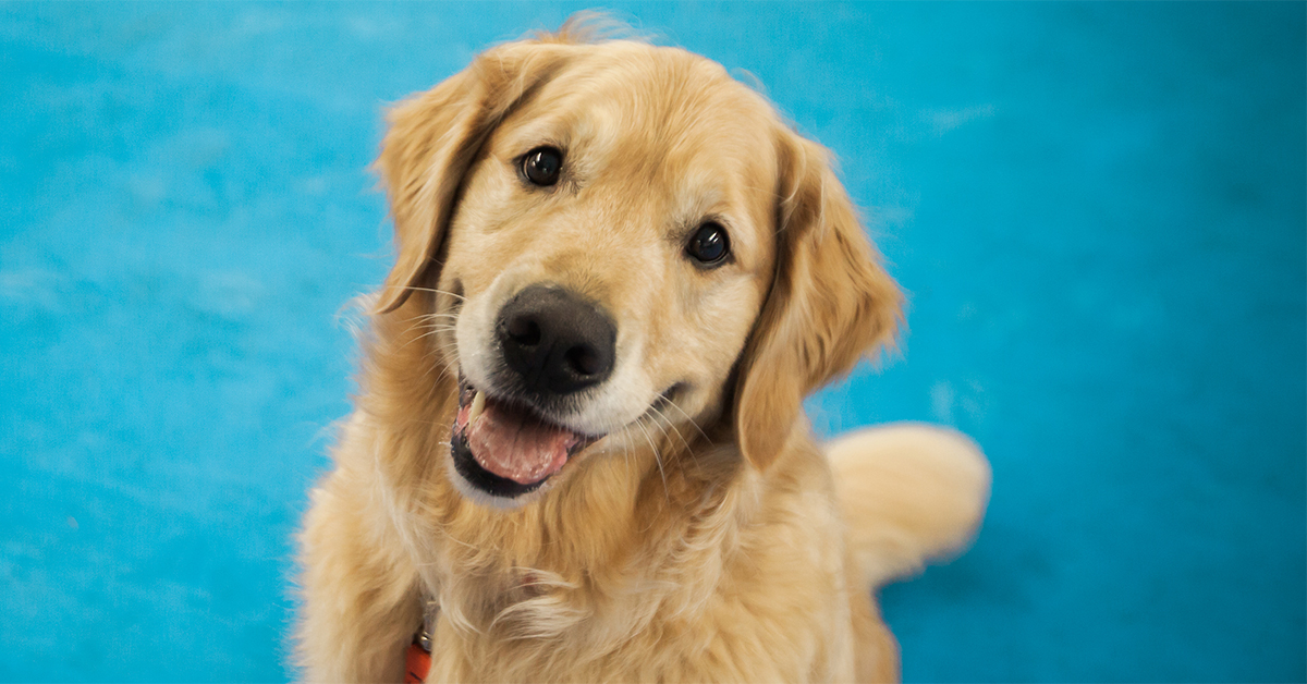Indoor Activities For Your Dog