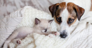 4 Tips For Introducing A New Kitten To Your Pet