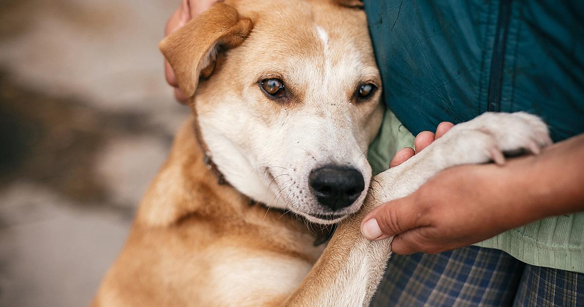 6 Tips for Caring For a Senior Dog