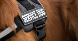 Ten Conditions Service Dogs Can Be Trained To Assist