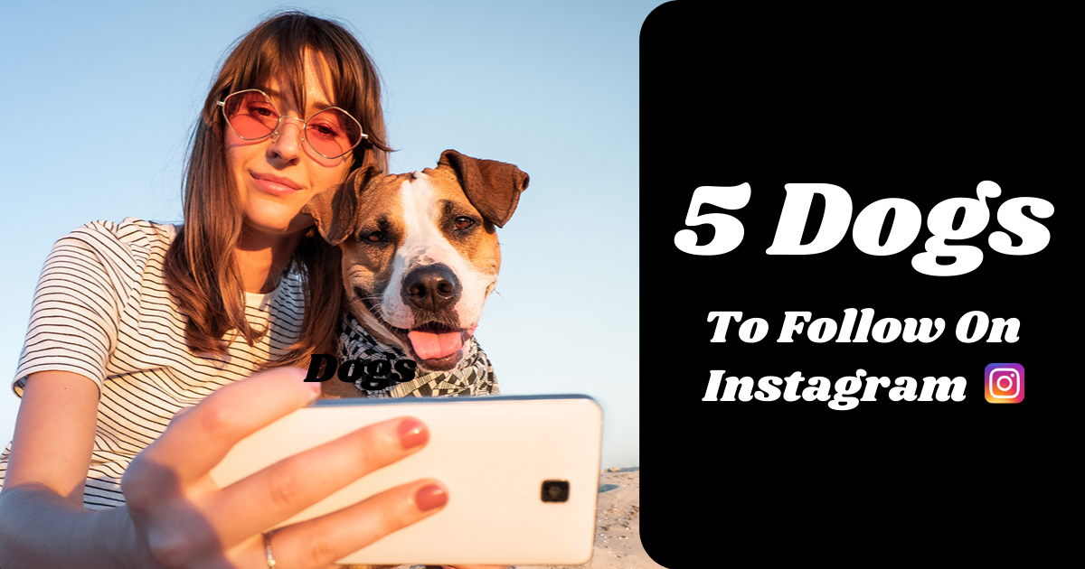 Five Dogs to Follow on Instagram 2021