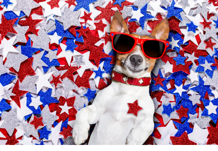 Pet Safety Tips for 4th of July