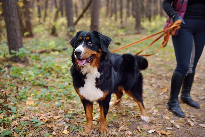 Fall Activities For Dogs - Cascade Kennels