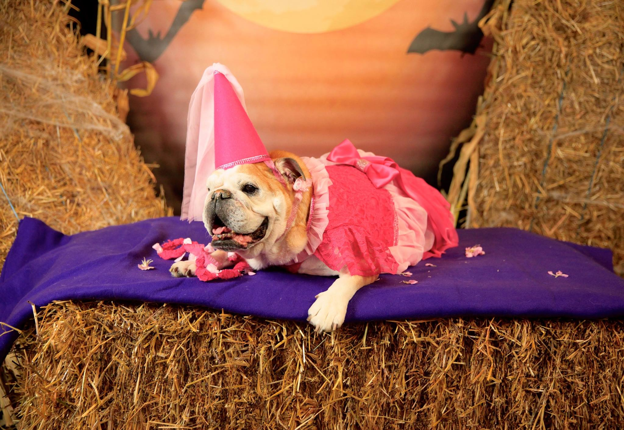 Fun Halloween Costume Ideas For You and Your Dog